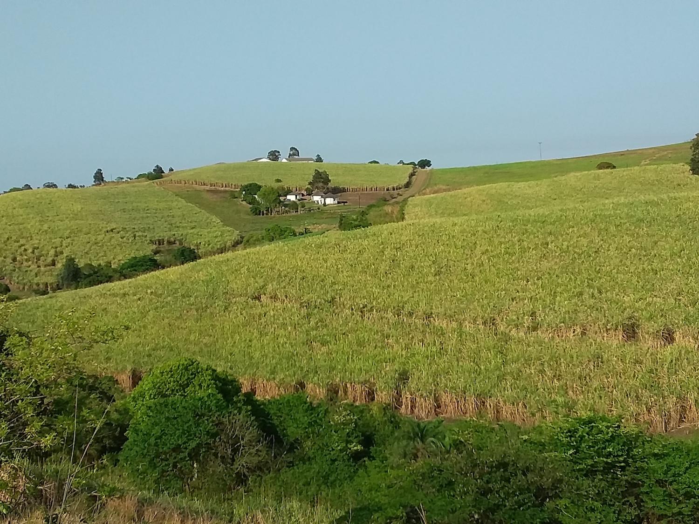 Sugarcane field in KZN